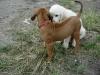 Eidi og Rocky, juli 2006