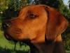 Eidi, Soknedalen 2007